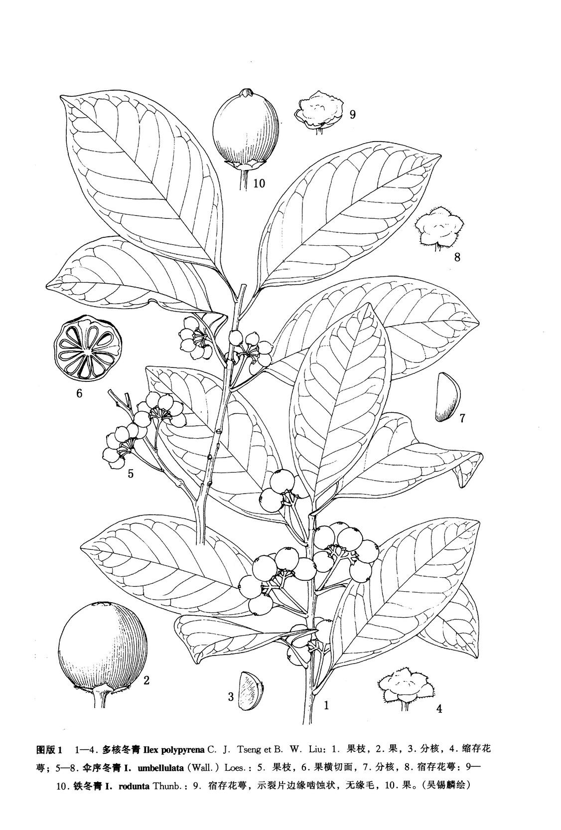 简笔画 手绘 线稿 1126_1665 竖版 竖屏
